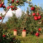 Dalbeck - Süssmosterei Obstkelterei Saftherstellung Safthersteller Lohnmosterei NRW
