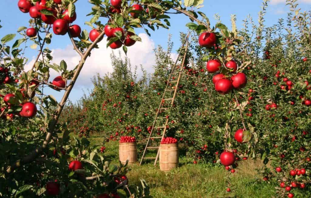 Süssmosterei Dalbeck NRW Heiligenhaus, Saftherstellung, Mosterei, Früchte Verarbeitung